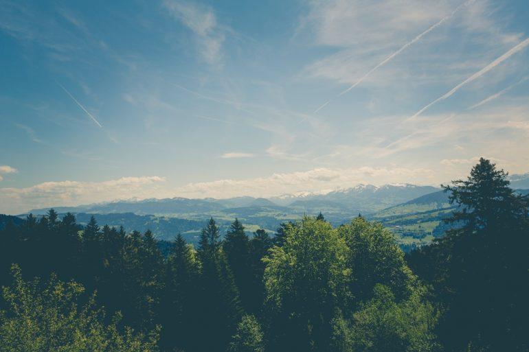 Skov udsigt