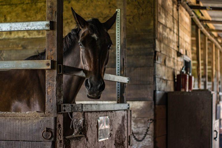 hestestald